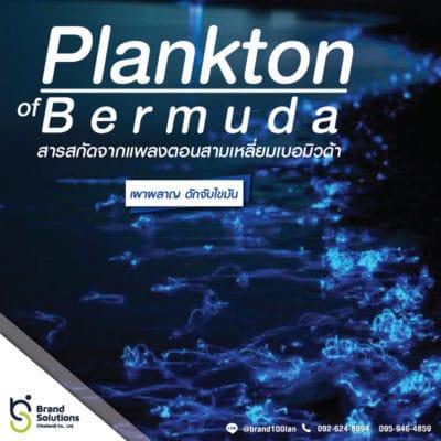 สูตรสารสกัดจากแพลงก์ตอน สามเหลี่ยมเบอมิวด้า Plankton of Bermuda