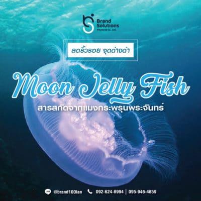 สูตรสารสกัดจากแมงกะพรุนพระจันทร์ Moon Jelly Fish