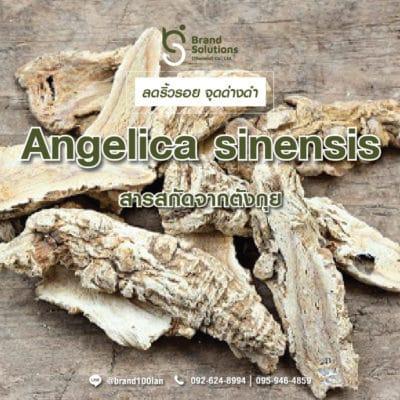 สูตรสารสกัดจากตังกุย Angelica sinensis