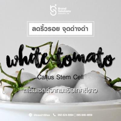 สูตรสารสกัดสเต็มเซลล์จากมะเขือเทศสีขาว White Tomato Callus Stem Cell
