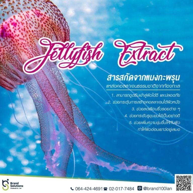 Jellyfish Extract สารสกัดจากแมงกะพรุน